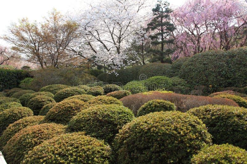 Jardín en el templo de Ryoan-ji imágenes de archivo libres de regalías