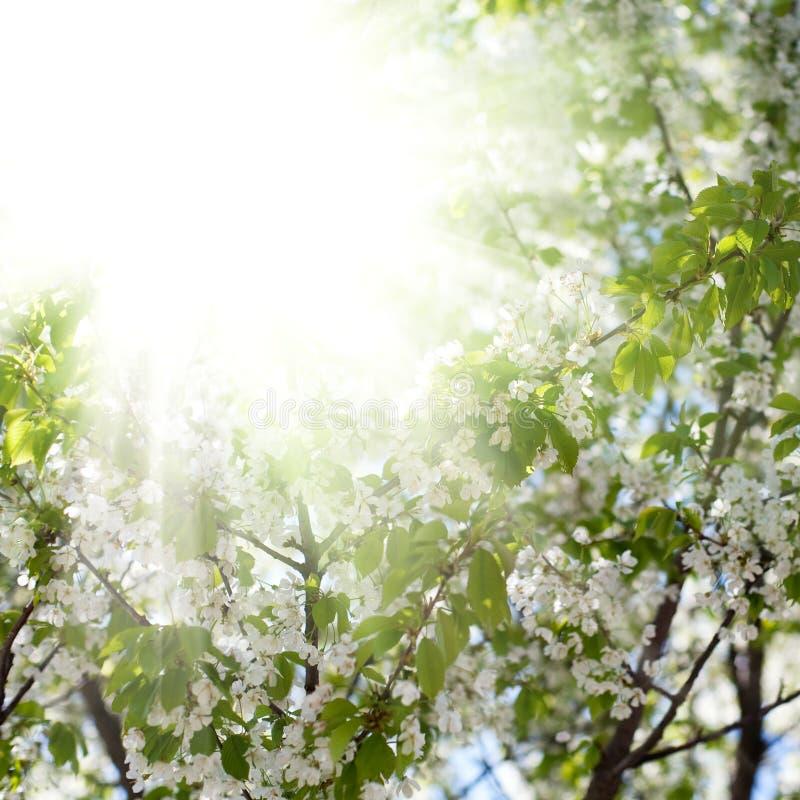 Jardín en la floración fotos de archivo