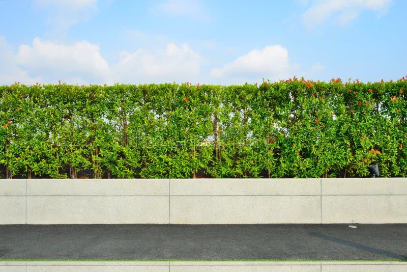 Jardín en tejado foto de archivo