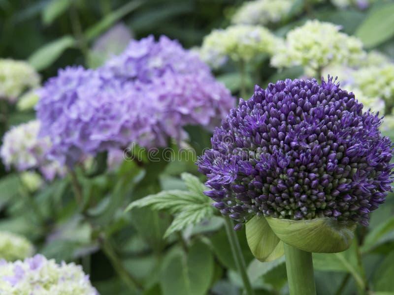 Jardín en verano imágenes de archivo libres de regalías