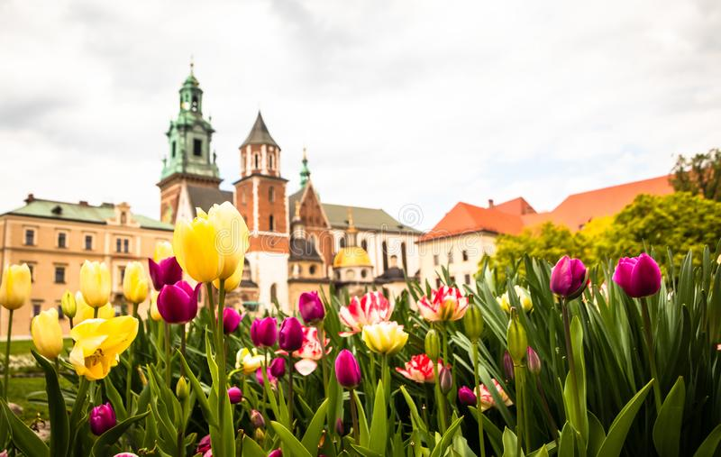 Jardín en yarda del castillo de Wawel con las flores hermosas imagenes de archivo