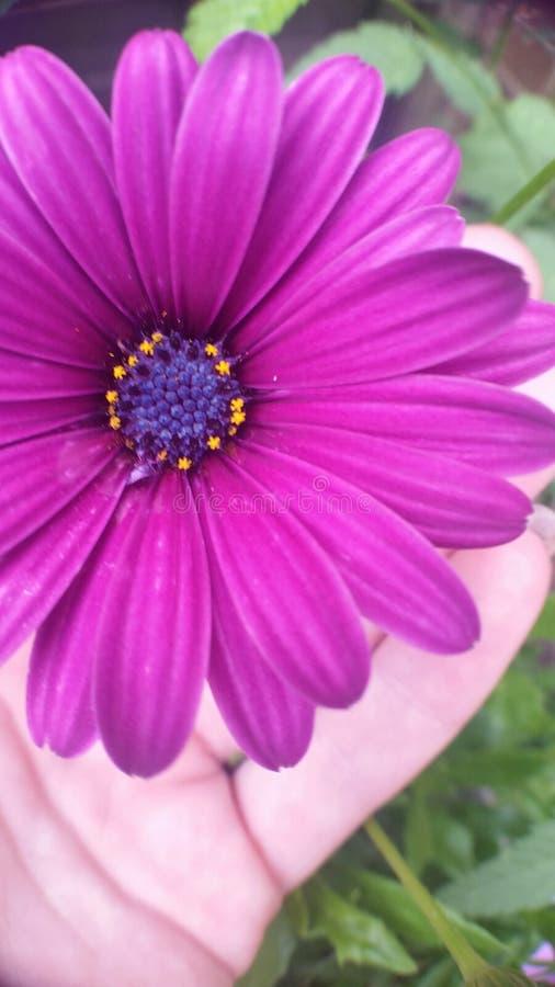 Jardín encantado fotos de archivo