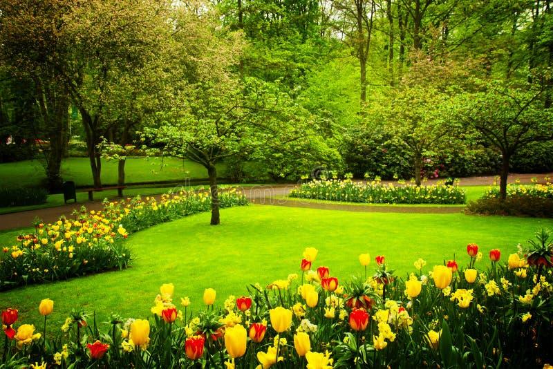 Jardín floreciente de la primavera foto de archivo libre de regalías