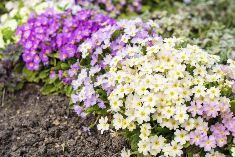 Jardín floreciente de la primavera hermosa imagenes de archivo