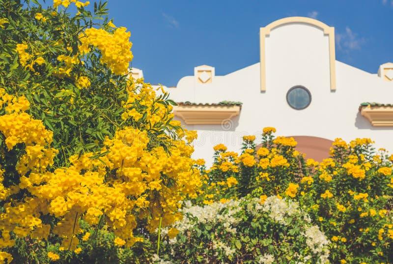 Jardín floreciente en el sol cerca del edificio blanco fotos de archivo libres de regalías