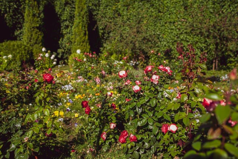 Jardín floreciente, un claro en la luz del sol fotografía de archivo