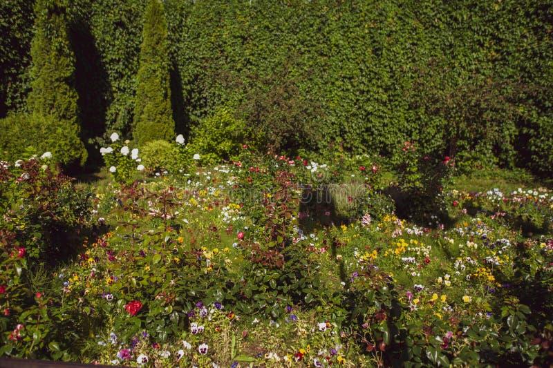 Jardín floreciente, un claro en la luz del sol, fotos de archivo
