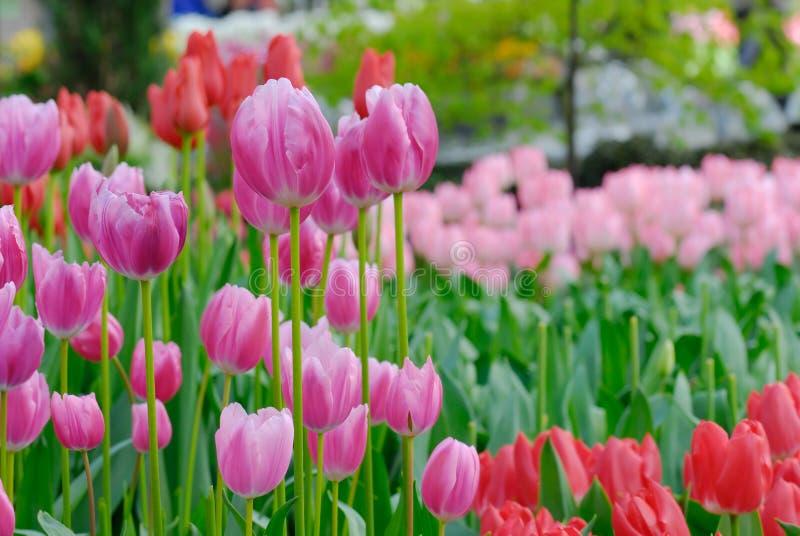 Jardín hermoso imagen de archivo libre de regalías