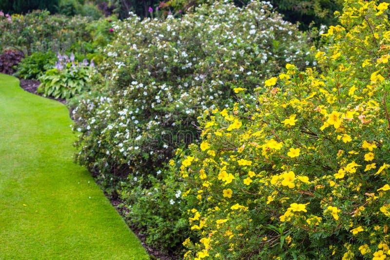 Jard n hermoso con la variedad de rboles y de arbustos for Cespugli giardino
