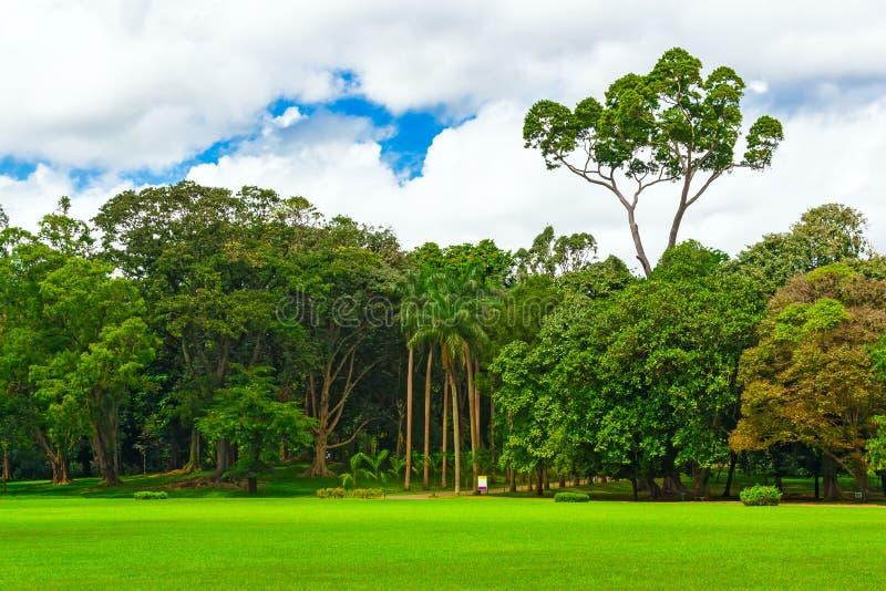 Jardín hermoso con los árboles viejos y los céspedes verdes Ciudad del paisaje fotos de archivo