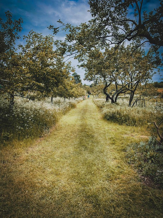 Jardín hermoso en Doncaster foto de archivo libre de regalías