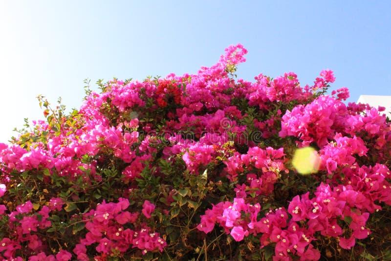 Jardín hermoso en Egipto imagen de archivo