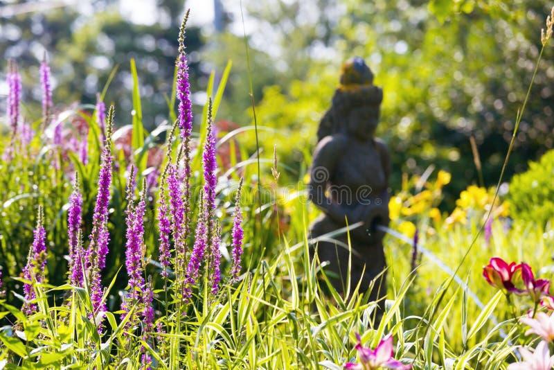 Jardín iluminado por el sol fotografía de archivo libre de regalías