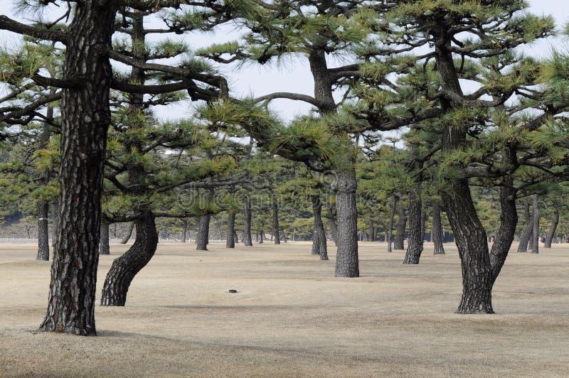 Jardín imperial del palacio, Tokio, Japón foto de archivo libre de regalías