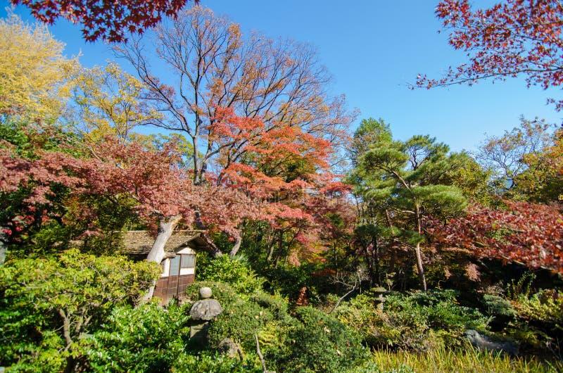 Jardín japonés con el arce, Tokio, Japón fotografía de archivo