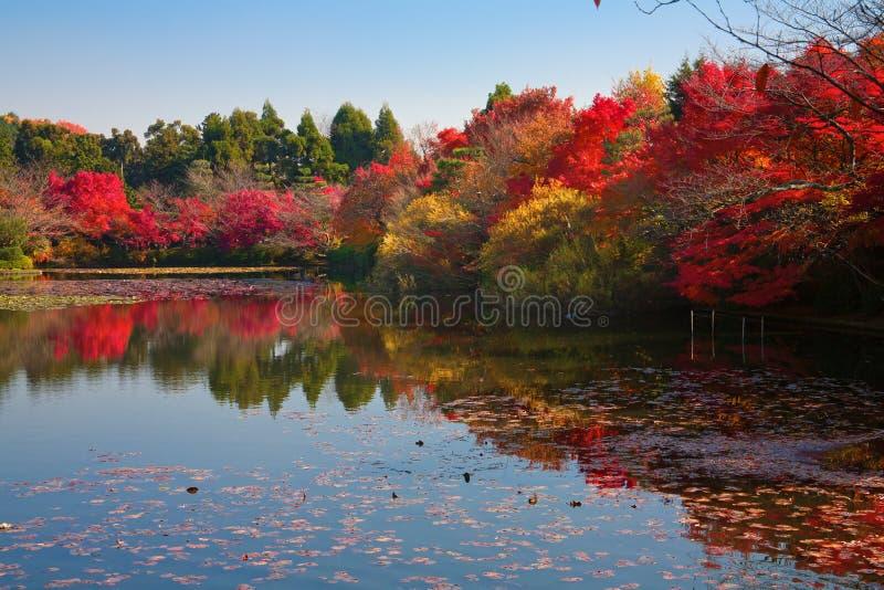 Jardín japonés en Kyoto imagen de archivo libre de regalías