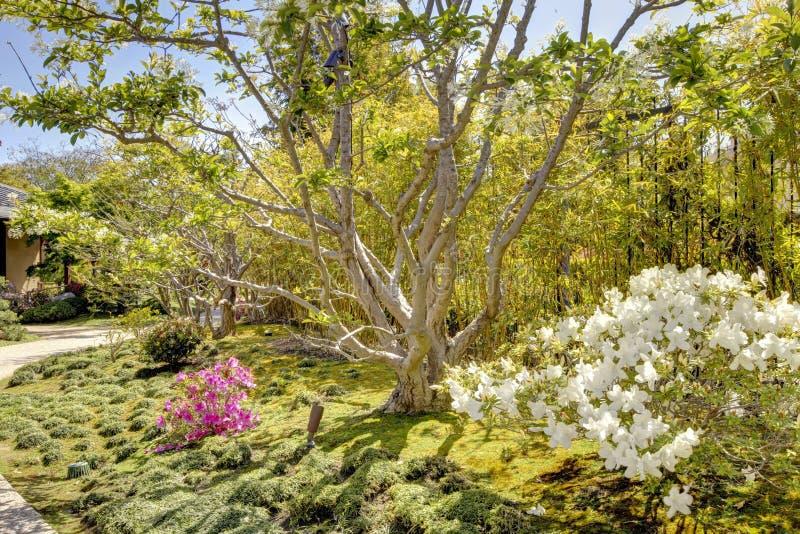 Jardín japonés en San Diego imagenes de archivo