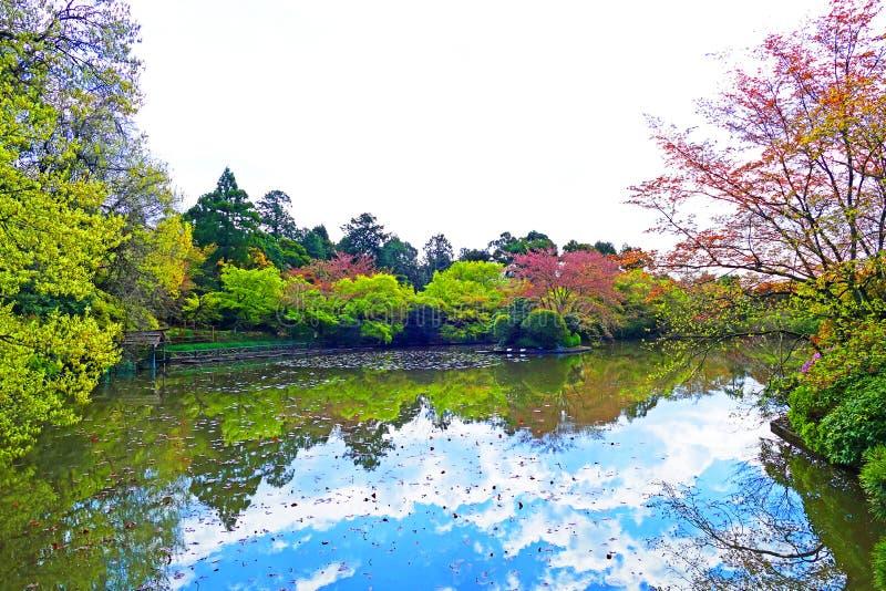 Jardín japonés tradicional en el templo de Ryoanji en Kyoto, Japón fotos de archivo