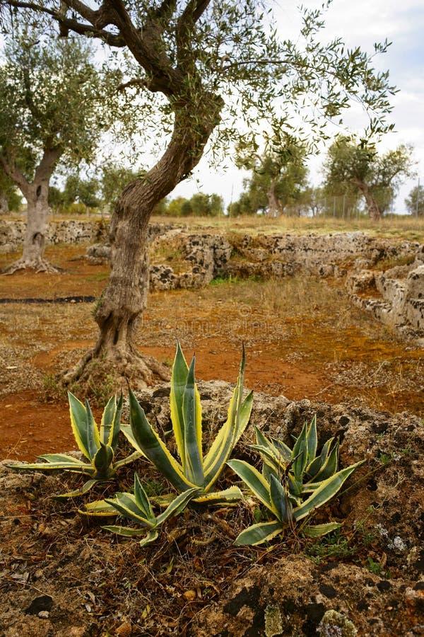 Jardín mediterráneo, primer la rama fotografía de archivo libre de regalías