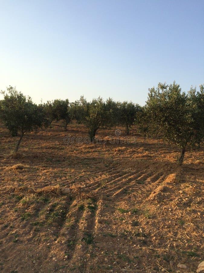 Jardín mediterráneo, primer la rama foto de archivo