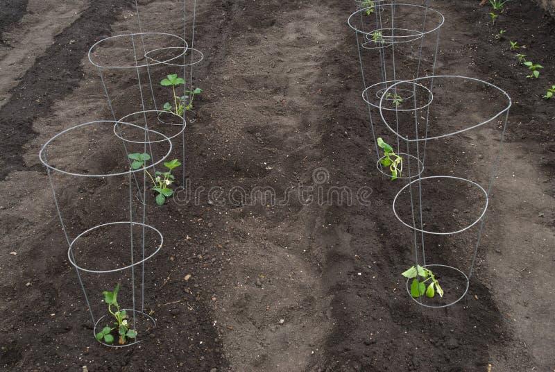 Jardín nuevamente plantado imagenes de archivo