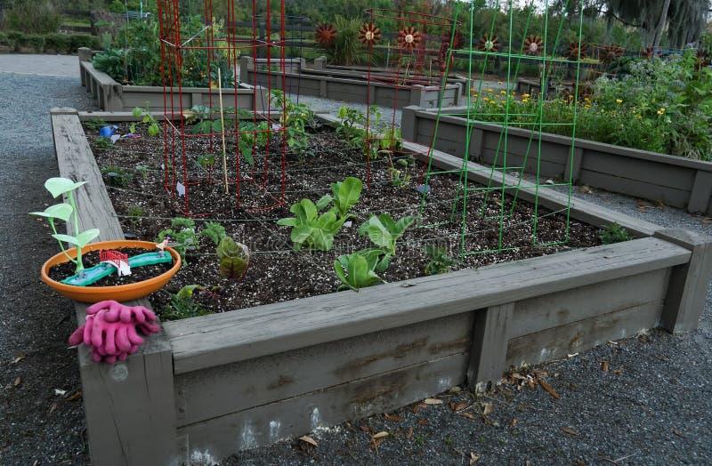 Jardín orgánico de la comunidad fotos de archivo