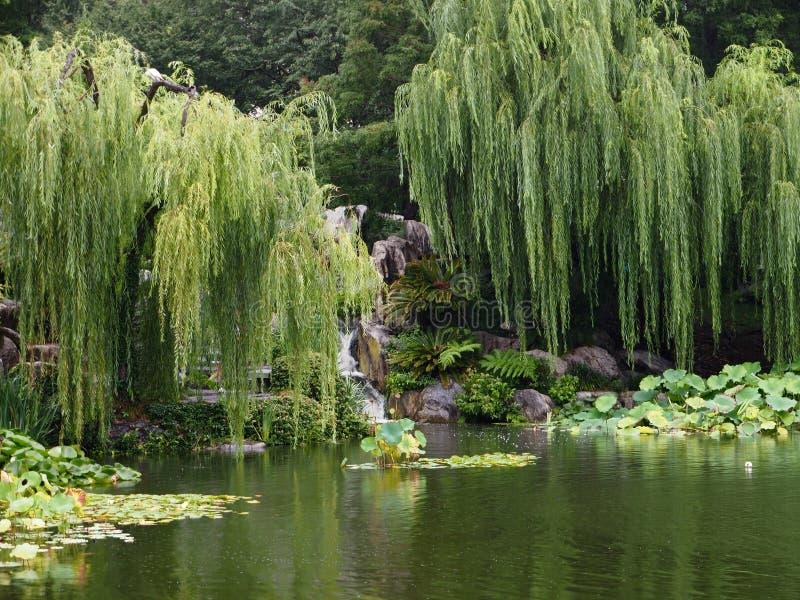 Jardín oriental aislado tranquilo con el sauce que llora y la charca foto de archivo