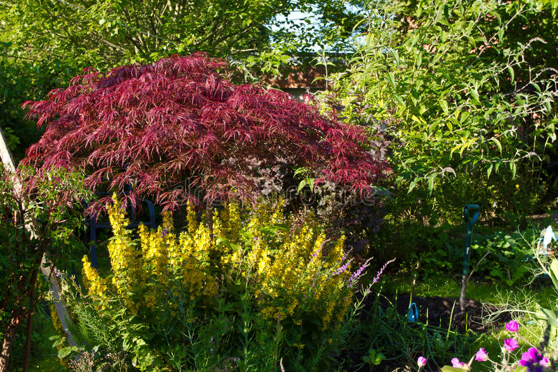 Jardín Overgrown imagen de archivo libre de regalías