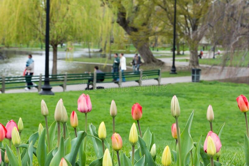 Jardín público de Boston en el resorte imágenes de archivo libres de regalías