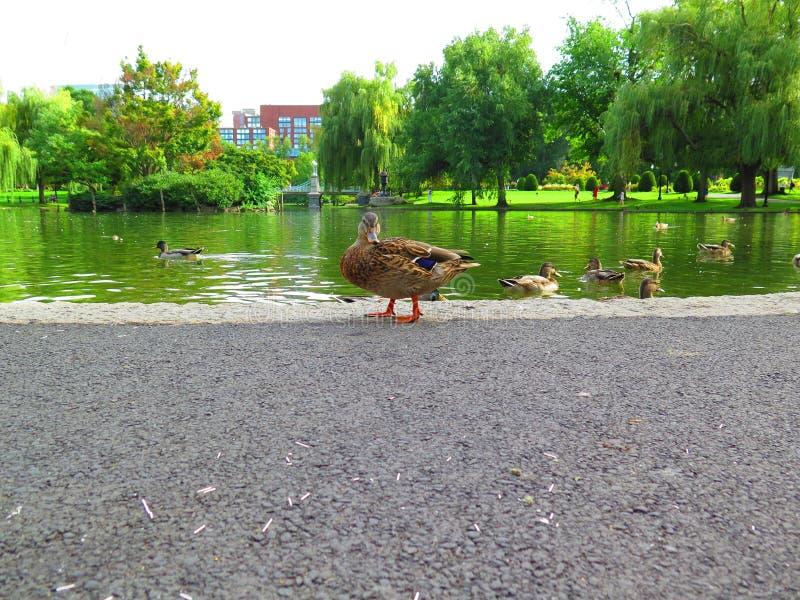 Jardín público en Boston imágenes de archivo libres de regalías