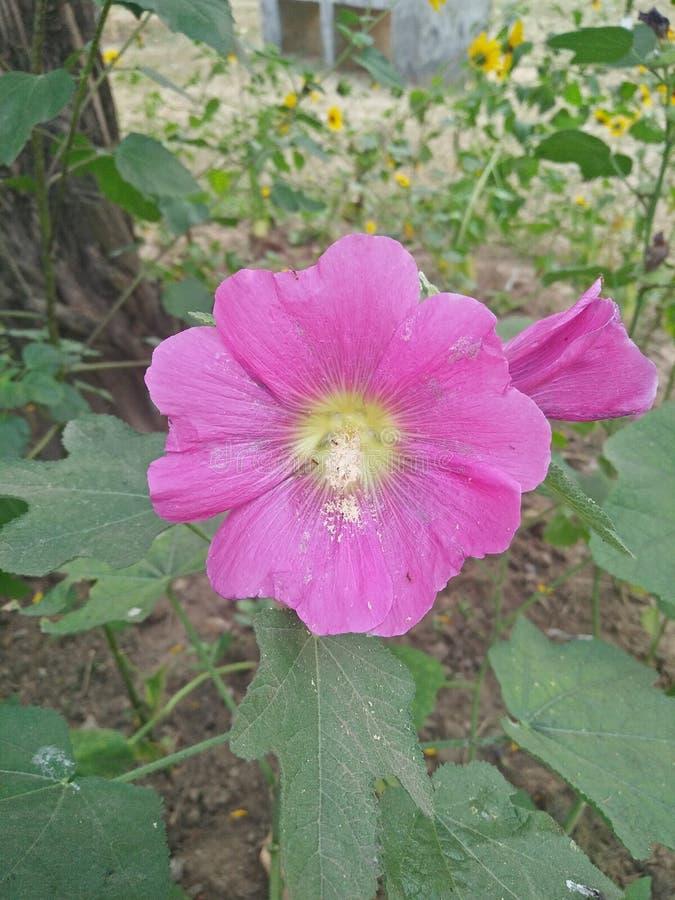 Jardín para el tacto del corazón foto de archivo