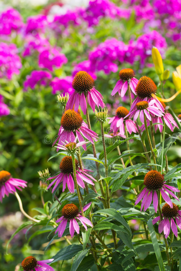 Jardín perenne imagenes de archivo