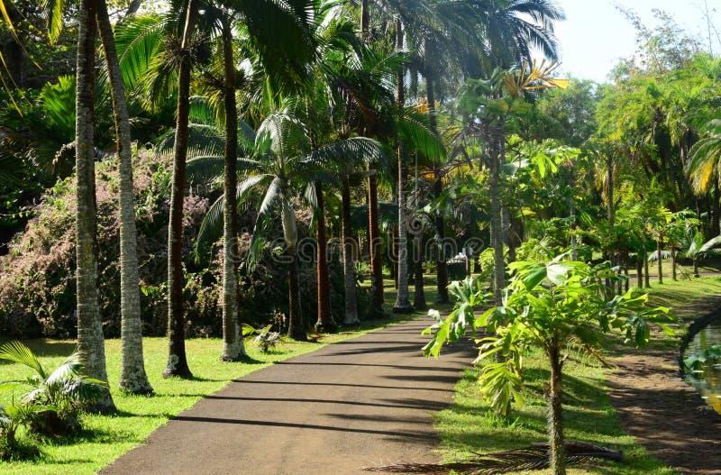 Jardín pintoresco de Pamplemousse en Mauritius Republic foto de archivo libre de regalías