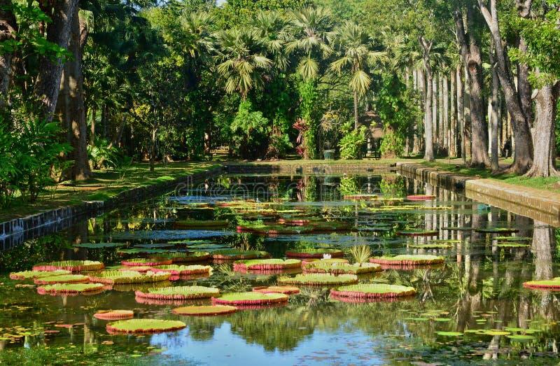 Jardín pintoresco de Pamplemousse en Mauritius Republic imágenes de archivo libres de regalías