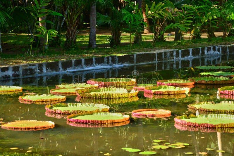 Jardín pintoresco de Pamplemousse en Mauritius Republic imagen de archivo