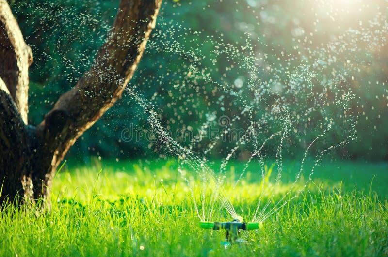Jardín, riego de la hierba Jardín elegante activado con el sistema de irrigación automático completo de regadera que trabaja en u imagen de archivo