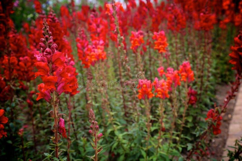 Jardín rojo fotos de archivo libres de regalías