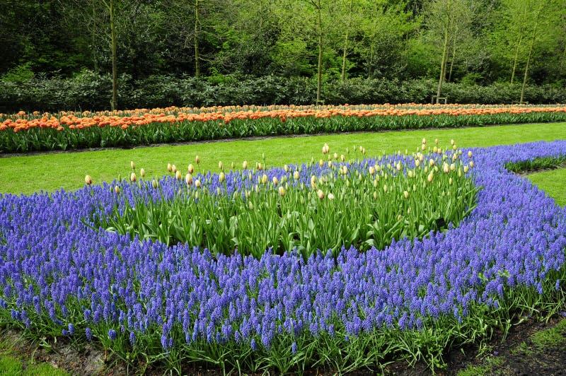 Jardín romántico del tulipán imagen de archivo