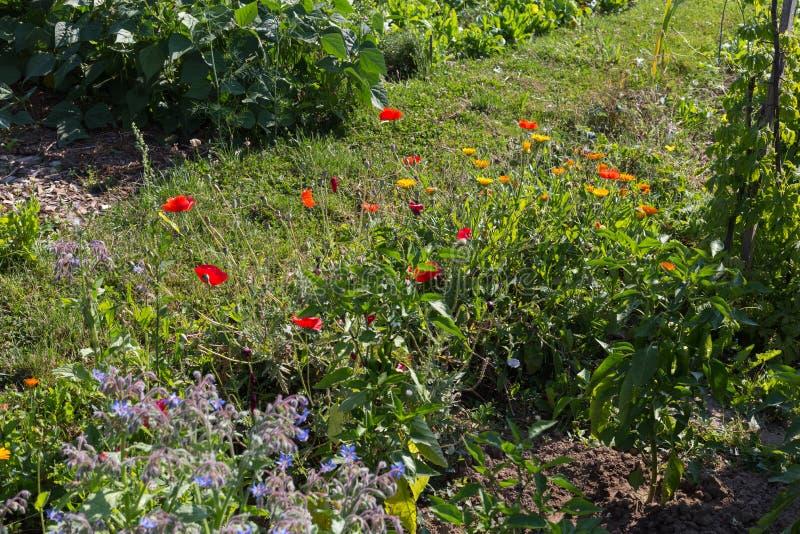 jardín rural de la cabaña en el día de verano caliente de julio fotografía de archivo libre de regalías