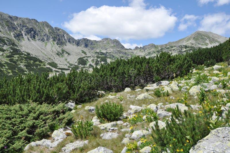 Jardín salvaje de la montaña foto de archivo