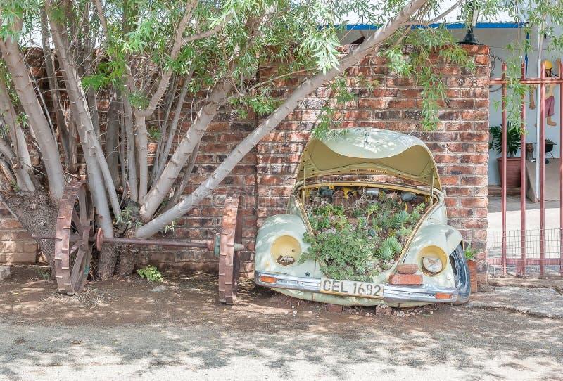 Jardín suculento inusual fotos de archivo libres de regalías