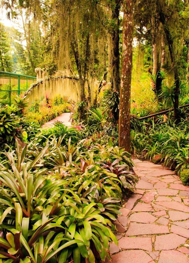 Jardín tropical imagen de archivo libre de regalías