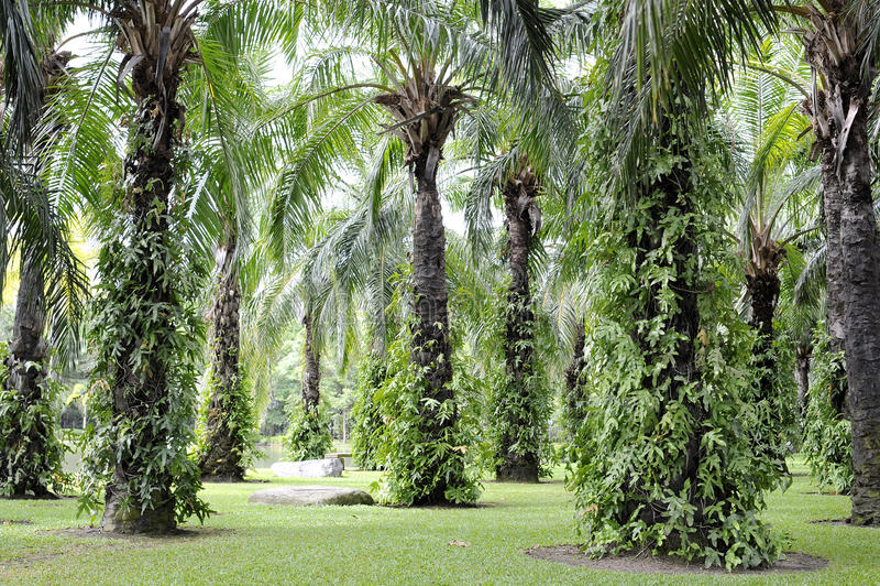 Jardín tropical con la palma imagen de archivo