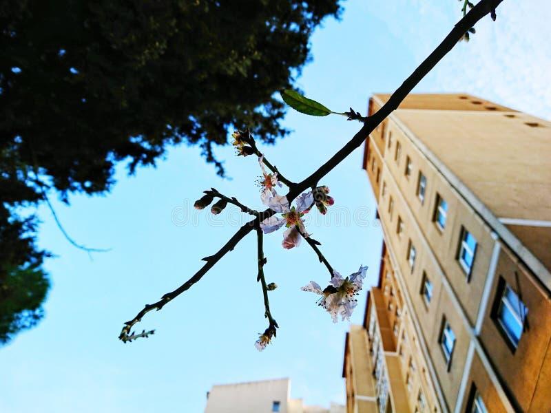 Jardín urbano fotos de archivo libres de regalías