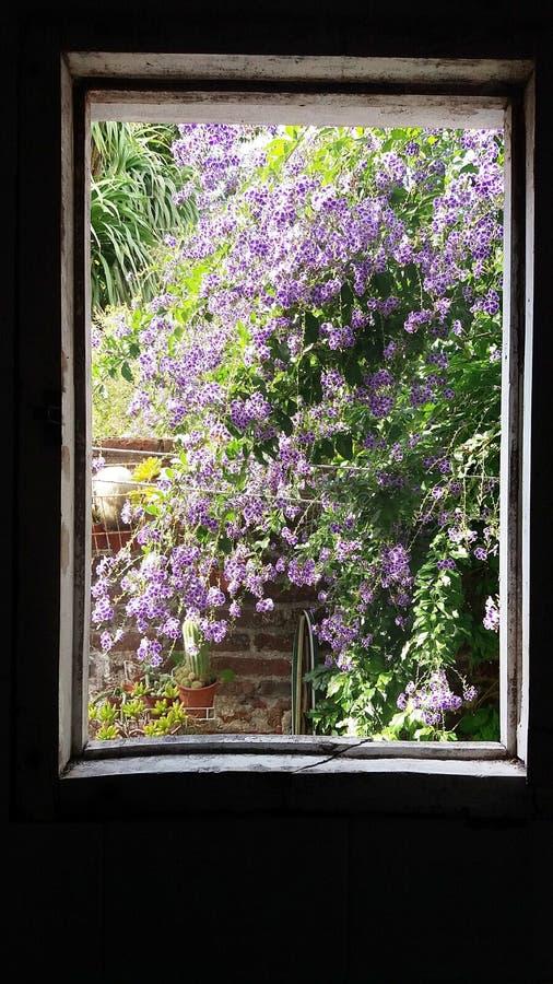 Jardín urbano de la ventana imagenes de archivo