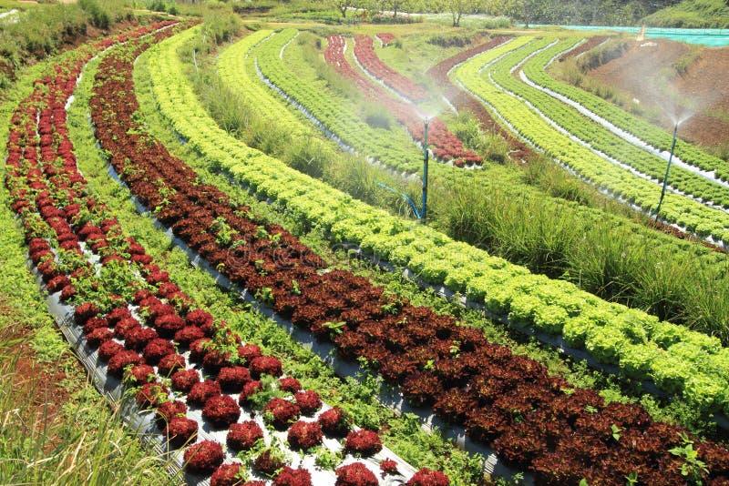 Jardín vegetal foto de archivo