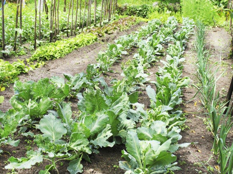 Jardín vegetal imagen de archivo
