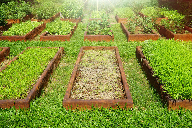 Jardín vegetal orgánico foto de archivo libre de regalías