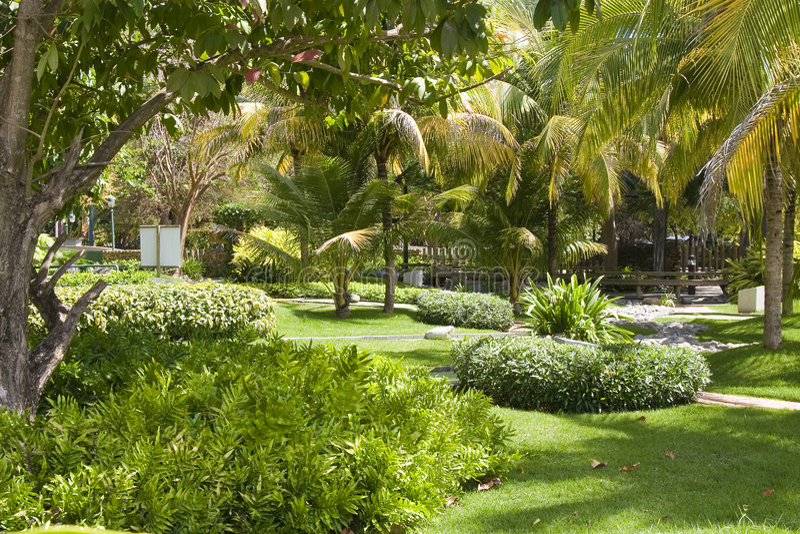 Jardín verde con la palmadita que recorre fotografía de archivo libre de regalías