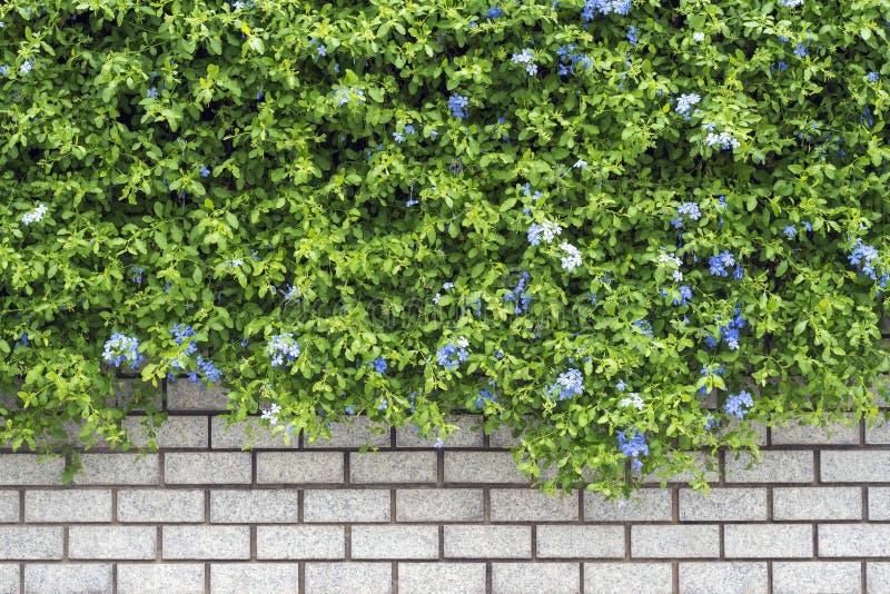 Jardín verde decorativo en una pared de ladrillo fotografía de archivo
